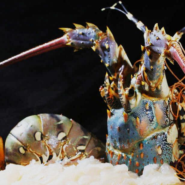 prestige-lobster-caviar-dinner-past