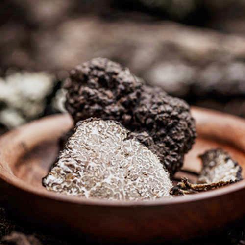 winter-black-truffle-past